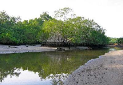 Refugio Nacional de Vida Silvestre Caletas Arío