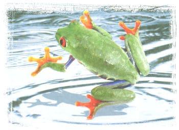 Anfibios de Costa Rica