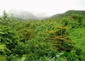Bosque Tropical Lluvioso